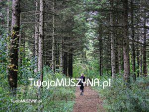 Szlaki turystyczne piesze