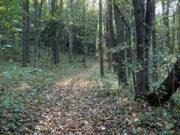 Las Lipowy Obrożyska - jesień 2011