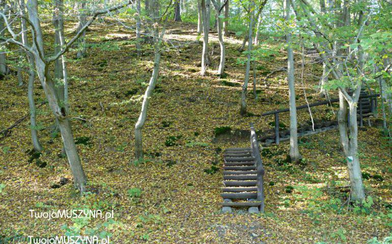 Las Lipowy Obrożyska - rezerwat
